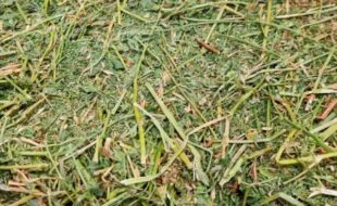 Inquiry about : Alfalfa Hay